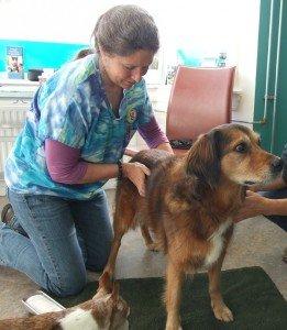 Linda Boggie tijdens de acupunctuur behandeling