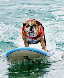 ht_1_surfcitysurfdog_dozersurfs_credit_jules_megill_678957568_996_ssv